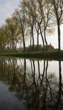 布鲁日运河反映结构树 免版税库存照片
