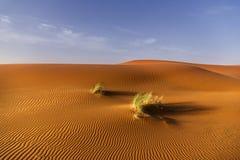 布什在沙漠 图库摄影