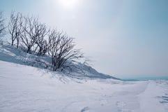 布什在雪白水晶雪表面上的霜盖了 库存图片