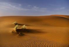 布什在Merzuga沙漠 免版税库存照片