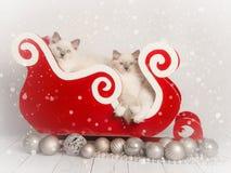 布洋娃娃猫圣诞卡 免版税库存图片