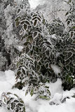 布什用树冰盖了以在假日公园严厉霜的树干为背景在冬天 库存照片