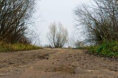 布什,树,自然 免版税库存图片