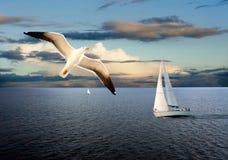 帆船和海鸥 免版税库存照片