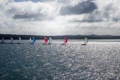帆船在奥克兰,新西兰 免版税库存照片