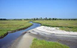 希尔顿总部沼泽 免版税库存照片