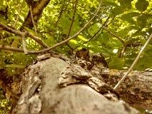 希腊坚果树 免版税库存图片