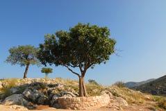 希腊小山mycenae 免版税库存图片