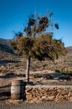 希腊桶和树 库存图片