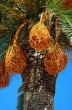 希腊棕榈树 库存照片