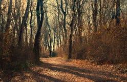 希腊森林 库存照片