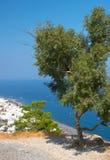 希腊橄榄色santorini结构树 图库摄影