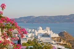希腊海岛芦粟 库存图片