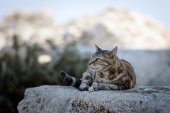 希腊猫在罗得岛海岛,希腊上的一块石头放置 库存图片