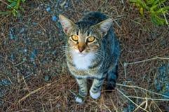 希腊猫看 库存图片