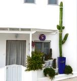 希腊的美丽的窗口 五颜六色的花缠绕和仙人掌植物和叶子 装饰门和窗口花圈 免版税图库摄影