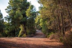 希腊自然 美丽如画的公园 橄榄树小树林 库存图片