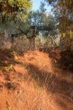 希腊自然 美丽如画的公园 橄榄树小树林 免版税库存照片