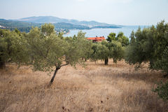 希腊自然 美丽如画的公园 图库摄影