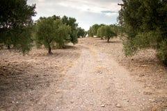希腊自然 美丽如画的公园 库存照片