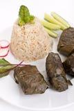 希腊语Dolmades用米和菜关闭  图库摄影