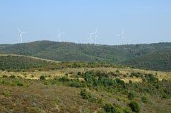 希腊, Dadia森林 免版税库存图片