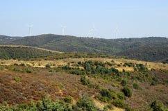 希腊, Dadia,森林 库存照片