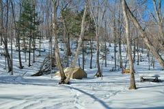 帐篷在冬天森林11里 库存照片