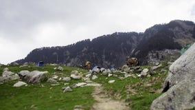 帐篷阵营与卸下在山的骡子 影视素材