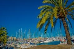 帕尔马,西班牙- 2017年8月18日:与白色游艇和一些棕榈树的美好的港口视图,在帕尔马de 免版税图库摄影