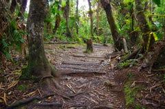帕斯托,哥伦比亚- 2016年7月3日:与位于la cotora海岛和植物的密林风景的有些树 免版税图库摄影