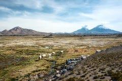 帕里纳科塔火山火山, Lauca,智利 库存图片