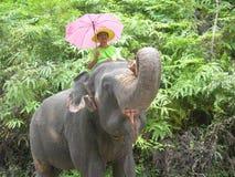 带他的大象出去为步行 免版税库存照片