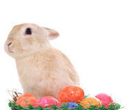 带来复活节彩蛋的复活节兔子 免版税库存图片