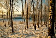 带来的横向雪冬天木头 库存图片