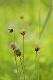 带来颜色的溪边水杨柳给英国草甸 免版税图库摄影