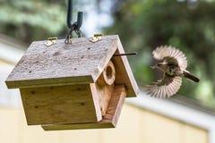带来食物的家鹪鹩给鸟舍 免版税图库摄影