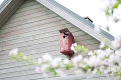 带来食物的春天开花和欧洲椋鸟给他的巢 库存照片