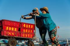 带来鱼捕获的妇女在会安市,越南附近 库存图片