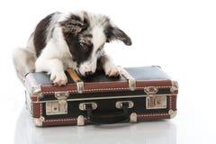 带着手提箱的小狗 免版税库存图片