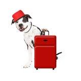 带着手提箱的狗旅馆侍者 免版税库存照片