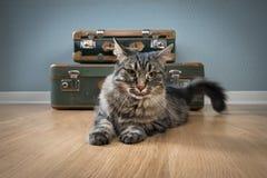带着葡萄酒手提箱的美丽的猫 库存图片