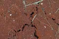 带红色地中海土壤土地Rossa在Istria,克罗地亚 库存照片