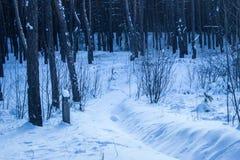 带领入晚上神奇森林的明亮地被突出的雪足迹 免版税库存图片
