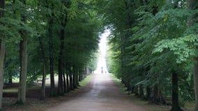 带领入森林的道路 库存图片