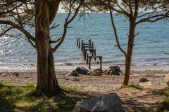 带领入海洋的老木打破的码头在法尔茅斯,麻省 免版税库存图片