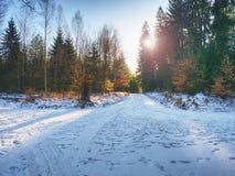 带领在山毛榉树中的斯诺伊道路在早期的冬天森林里 免版税库存照片