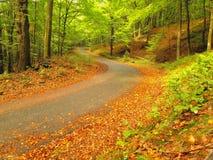 带领在山毛榉树中的沥青路线在雾包围的近的秋天森林 多雨的日 免版税库存图片