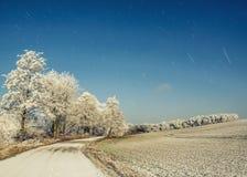 带领在结霜的树中的乡下公路 免版税库存图片