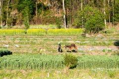 带领她的驴的农夫领域 库存照片